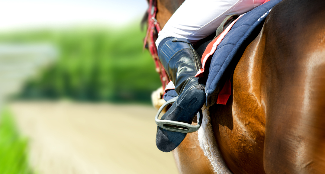 Endeavour Horse Image